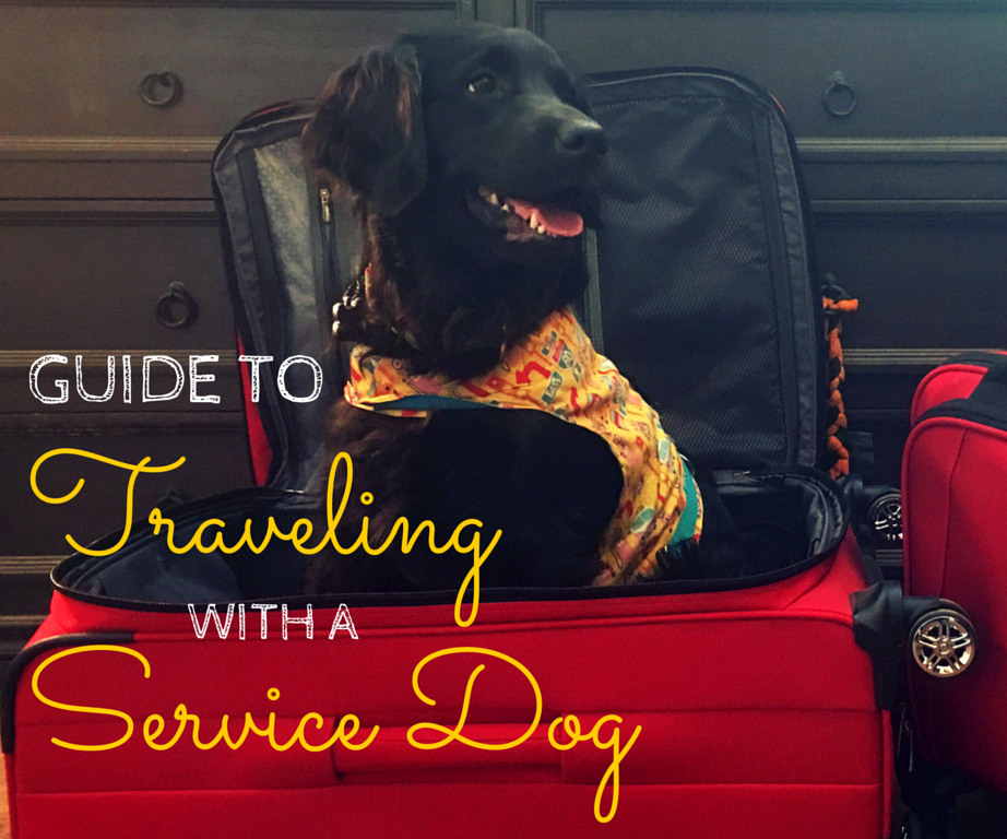 Guide to Traveling with a Service Dog • Free Wheelin\'